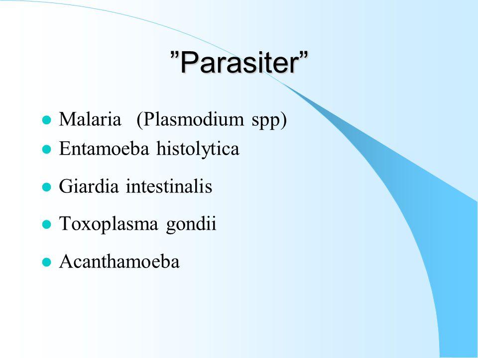 Parasiter l Malaria(Plasmodium spp) l Entamoeba histolytica l Giardia intestinalis l Toxoplasma gondii l Acanthamoeba