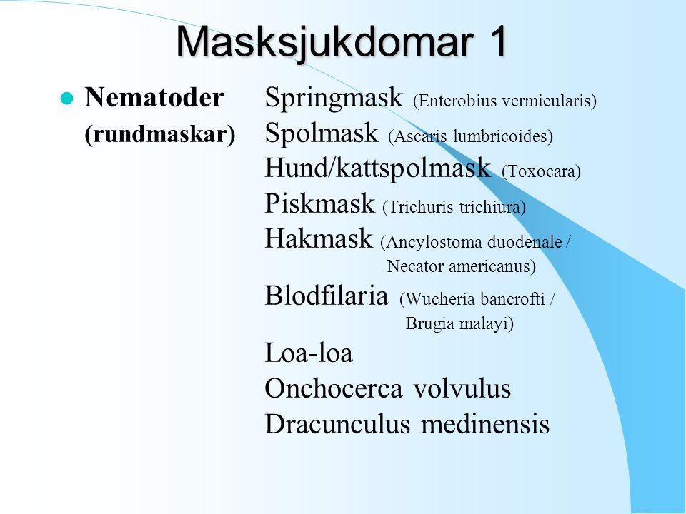 Masksjukdomar 1 l NematoderSpringmask (Enterobius vermicularis) (rundmaskar) Spolmask (Ascaris lumbricoides) Hund/kattspolmask (Toxocara) Piskmask (Trichuris trichiura) Hakmask (Ancylostoma duodenale / Necator americanus) Blodfilaria (Wucheria bancrofti / Brugia malayi) Loa-loa Onchocerca volvulus Dracunculus medinensis