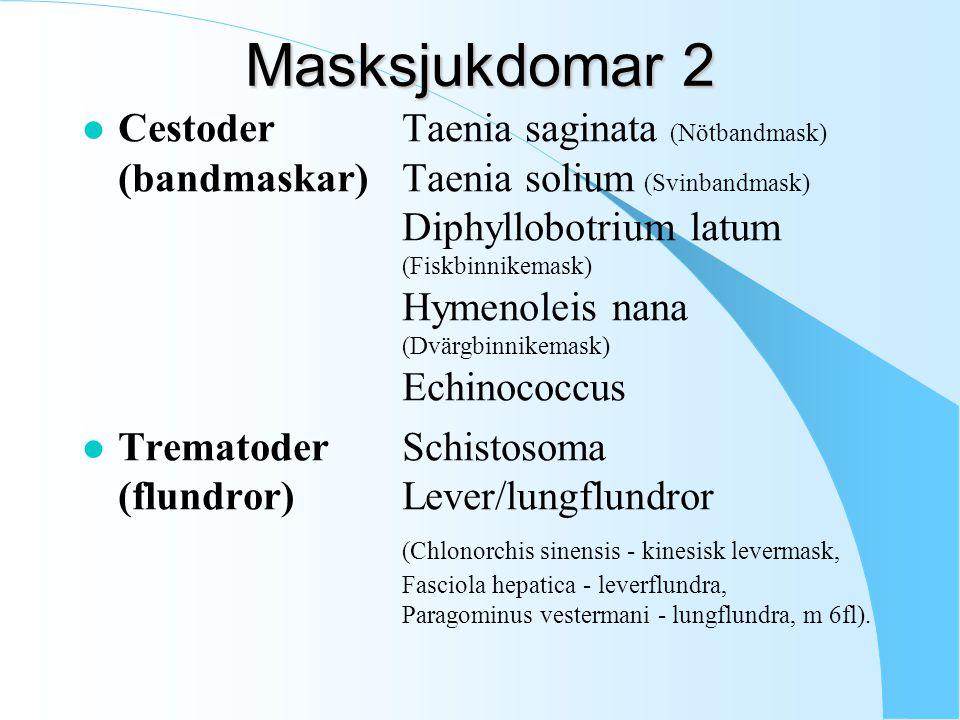 Masksjukdomar 2 l CestoderTaenia saginata (Nötbandmask) (bandmaskar)Taenia solium (Svinbandmask) Diphyllobotrium latum (Fiskbinnikemask) Hymenoleis nana (Dvärgbinnikemask) Echinococcus l TrematoderSchistosoma (flundror)Lever/lungflundror (Chlonorchis sinensis - kinesisk levermask, Fasciola hepatica - leverflundra, Paragominus vestermani - lungflundra, m 6fl).
