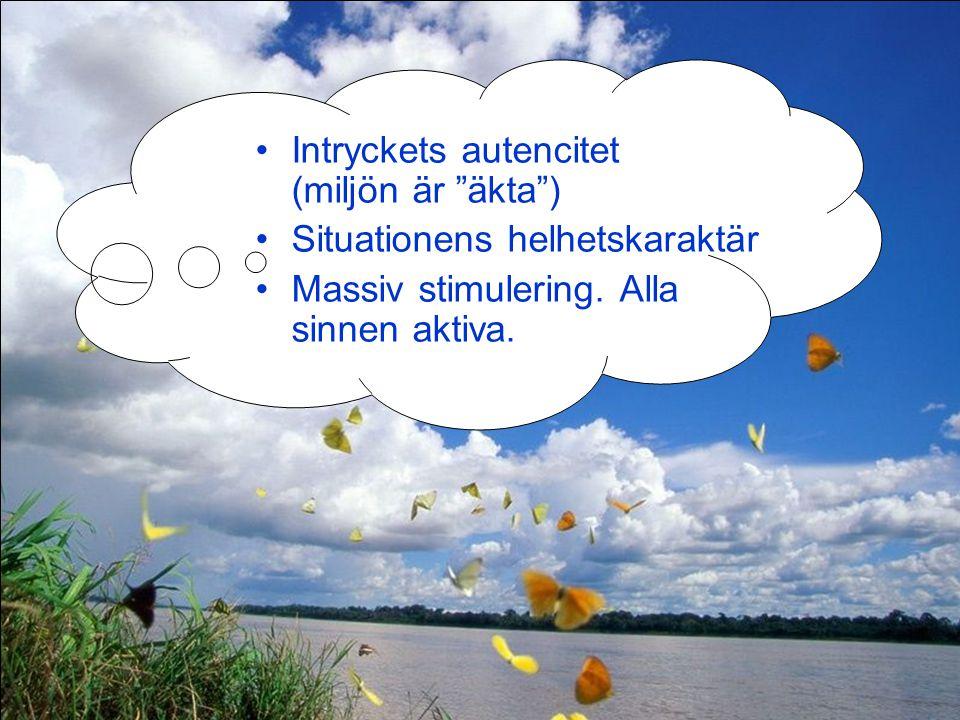 """Intryckets autencitet (miljön är """"äkta"""") Situationens helhetskaraktär Massiv stimulering. Alla sinnen aktiva."""