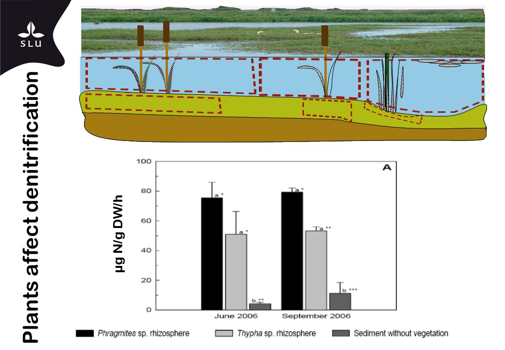 µg N/g DW/h Plants affect denitrification
