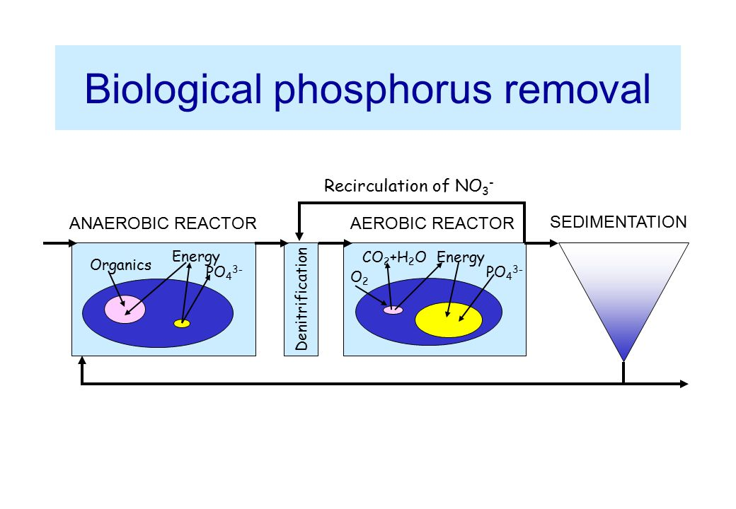 Biological phosphorus removal PO 4 3- O2O2 CO 2 +H 2 OEnergy PO 4 3- Organics Denitrification ANAEROBIC REACTORAEROBIC REACTOR SEDIMENTATION Recircula