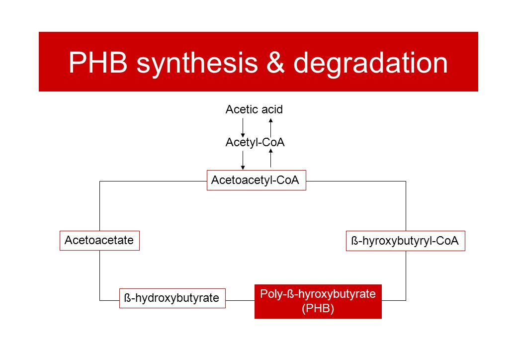 PHB synthesis & degradation Acetoacetate ß-hyroxybutyryl-CoA ß-hydroxybutyrate Acetoacetyl-CoA Poly-ß-hyroxybutyrate (PHB) Acetic acid Acetyl-CoA