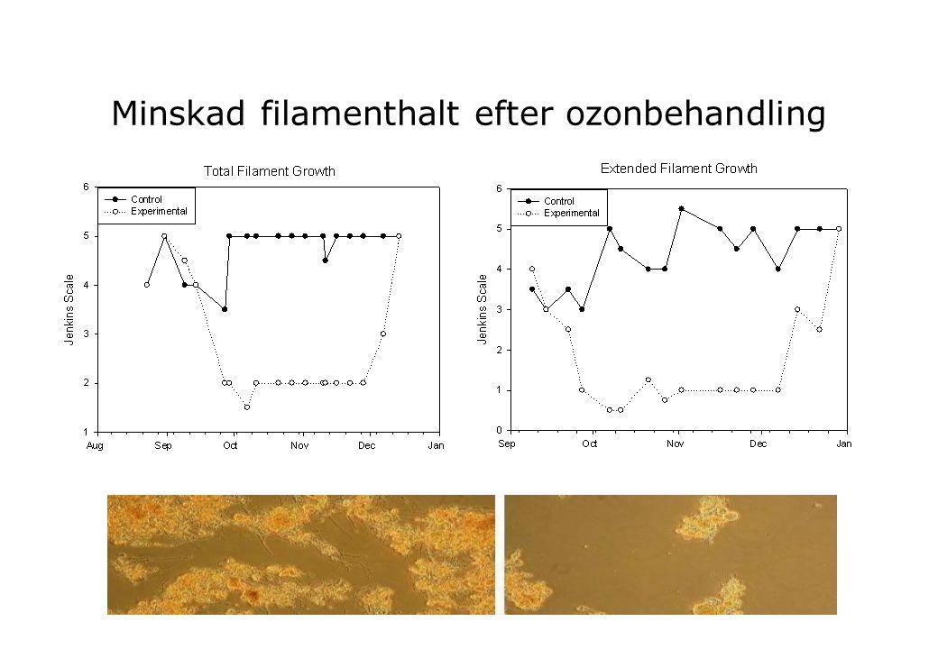 Minskad filamenthalt efter ozonbehandling