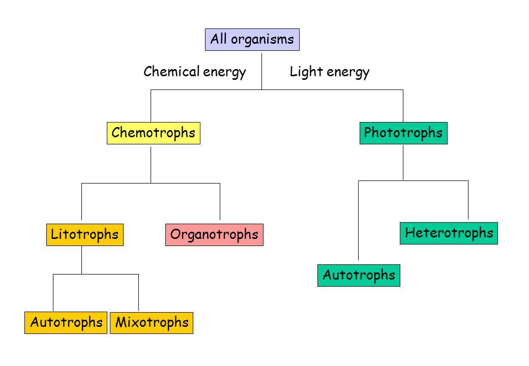 LitotrophsOrganotrophs Heterotrophs Autotrophs All organisms Chemical energyLight energy ChemotrophsPhototrophs Autotrophs Mixotrophs