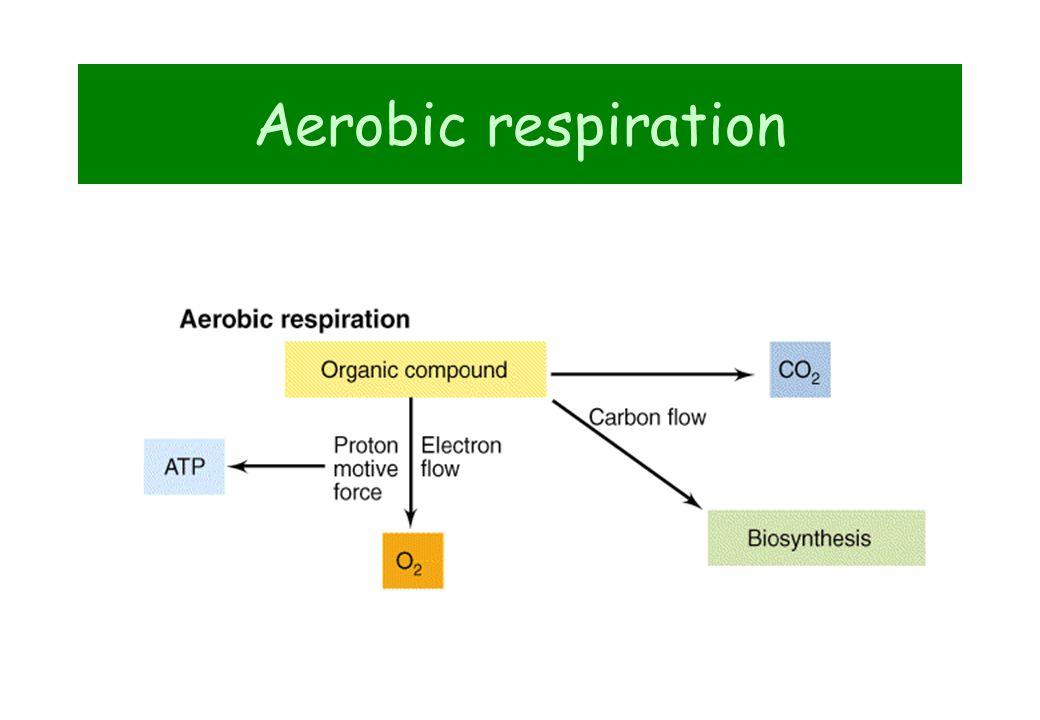 Biological phosphorus removal PO 4 3- O2O2 CO 2 +H 2 OEnergy PO 4 3- Organics Denitrification ANAEROBIC REACTORAEROBIC REACTOR SEDIMENTATION Recirculation of NO 3 -
