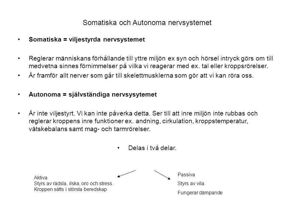 Somatiska och Autonoma nervsystemet Somatiska = viljestyrda nervsystemet Reglerar människans förhållande till yttre miljön ex syn och hörsel intryck g