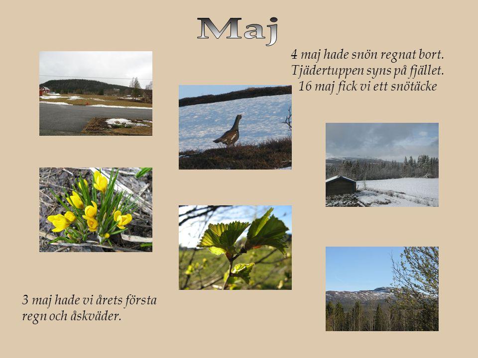 3 maj hade vi årets första regn och åskväder.4 maj hade snön regnat bort.