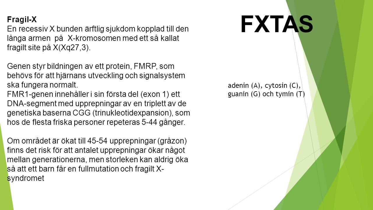 FXTAS Fragil-X En recessiv X bunden ärftlig sjukdom kopplad till den långa armen på X-kromosomen med ett så kallat fragilt site på X(Xq27,3). Genen st