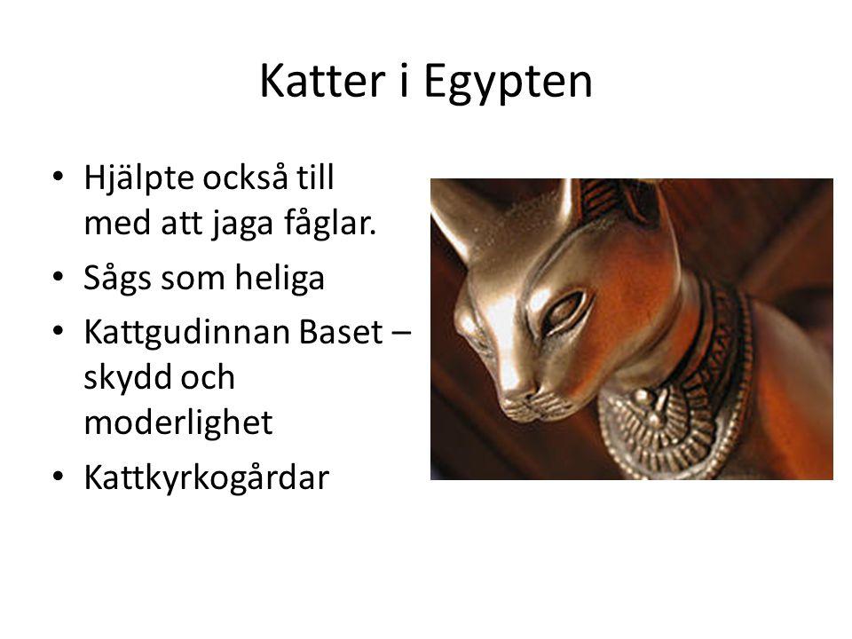 Katter i Egypten Hjälpte också till med att jaga fåglar.