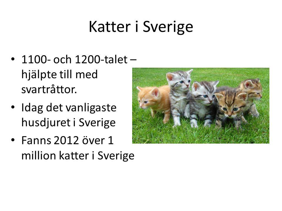 Katter i Sverige 1100- och 1200-talet – hjälpte till med svartråttor.