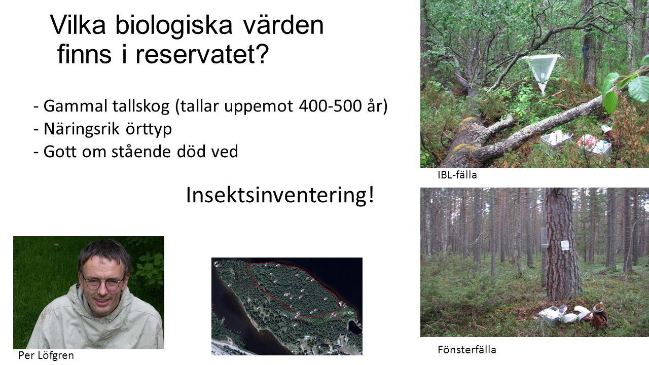 Vilka biologiska värden finns i reservatet? IBL-fälla Fönsterfälla Insektsinventering! Per Löfgren - Gammal tallskog (tallar uppemot 400-500 år) - När