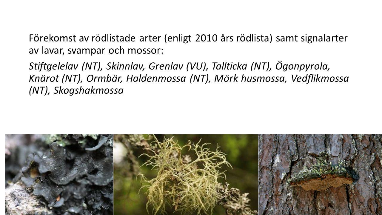 Förekomst av rödlistade arter (enligt 2010 års rödlista) samt signalarter av lavar, svampar och mossor: Stiftgelelav (NT), Skinnlav, Grenlav (VU), Tal