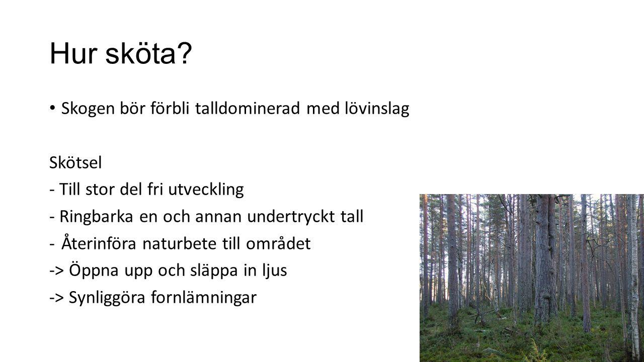 Hur sköta? Skogen bör förbli talldominerad med lövinslag Skötsel - Till stor del fri utveckling - Ringbarka en och annan undertryckt tall -Återinföra