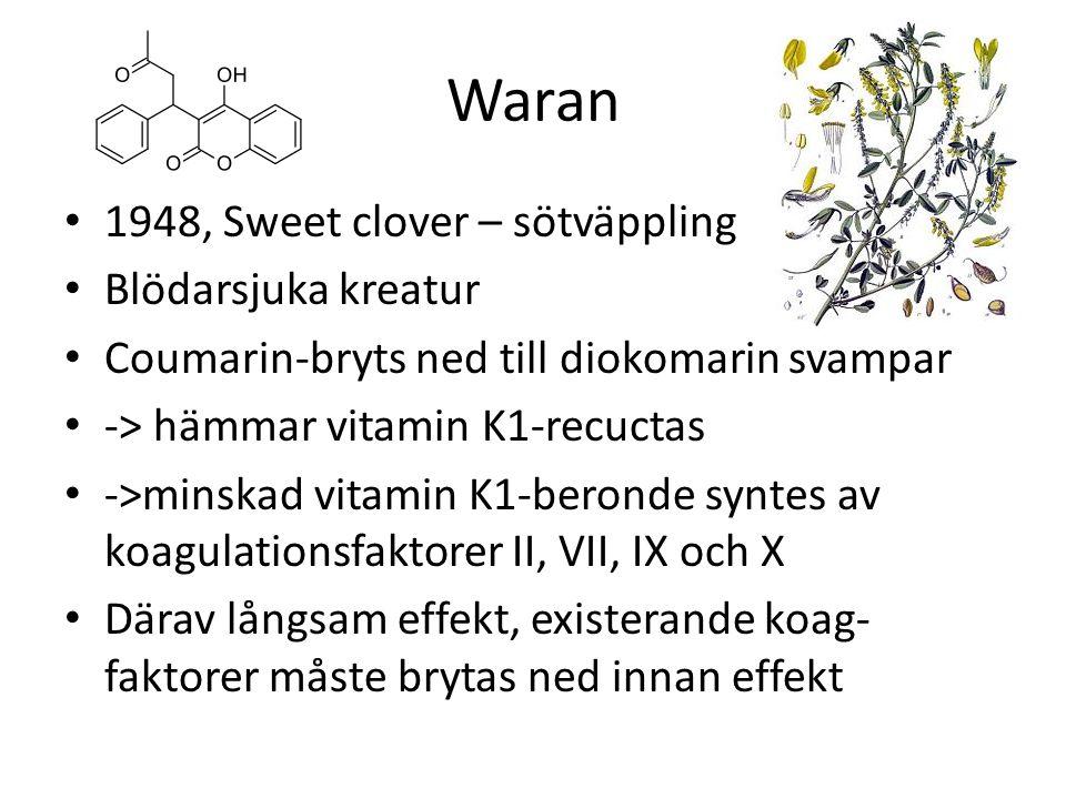 Waran 1948, Sweet clover – sötväppling Blödarsjuka kreatur Coumarin-bryts ned till diokomarin svampar -> hämmar vitamin K1-recuctas ->minskad vitamin K1-beronde syntes av koagulationsfaktorer II, VII, IX och X Därav långsam effekt, existerande koag- faktorer måste brytas ned innan effekt