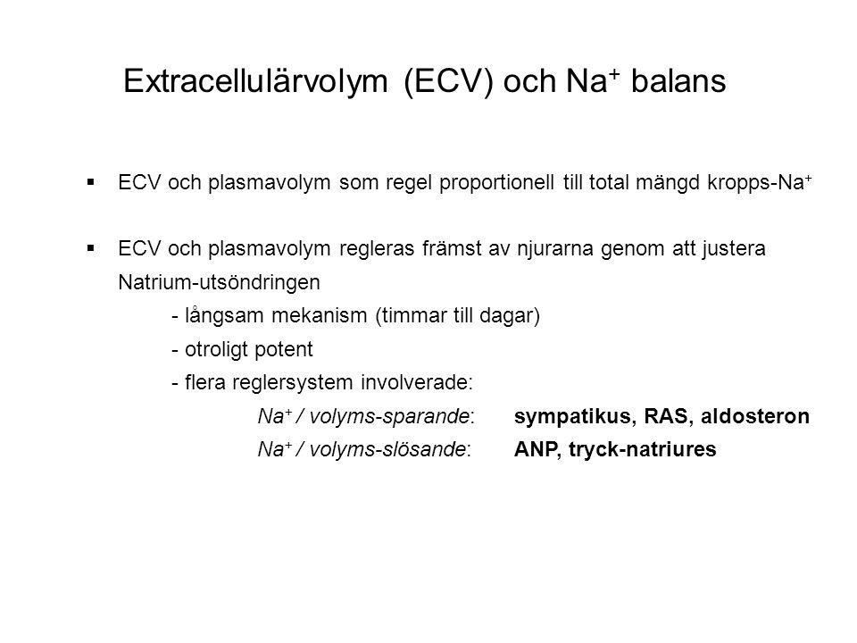 Extracellulärvolym (ECV) och Na + balans  ECV och plasmavolym som regel proportionell till total mängd kropps-Na +  ECV och plasmavolym regleras frä