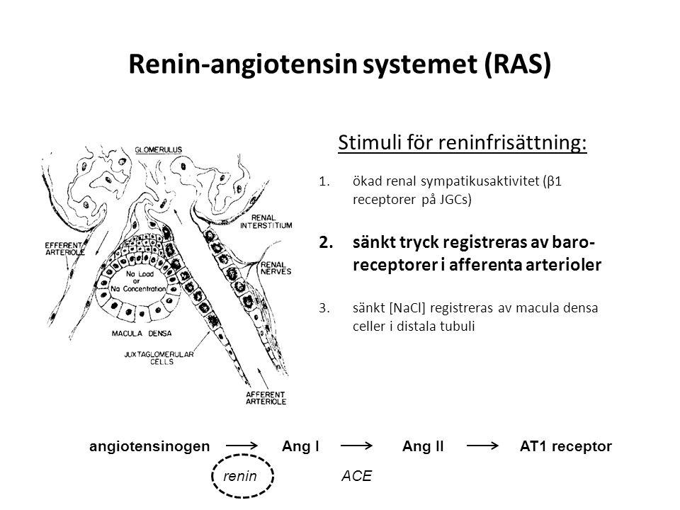 Renin-angiotensin systemet (RAS) 1.ökad renal sympatikusaktivitet (β1 receptorer på JGCs) 2.sänkt tryck registreras av baro- receptorer i afferenta ar