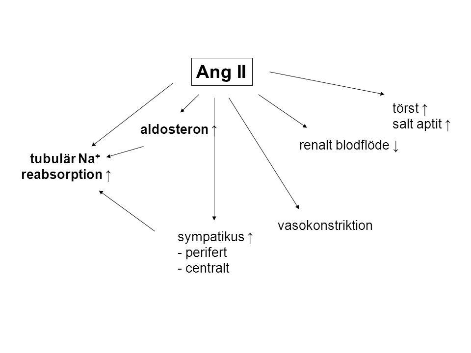 Ang II tubulär Na + reabsorption ↑ aldosteron ↑ sympatikus ↑ - perifert - centralt renalt blodflöde ↓ törst ↑ salt aptit ↑ vasokonstriktion