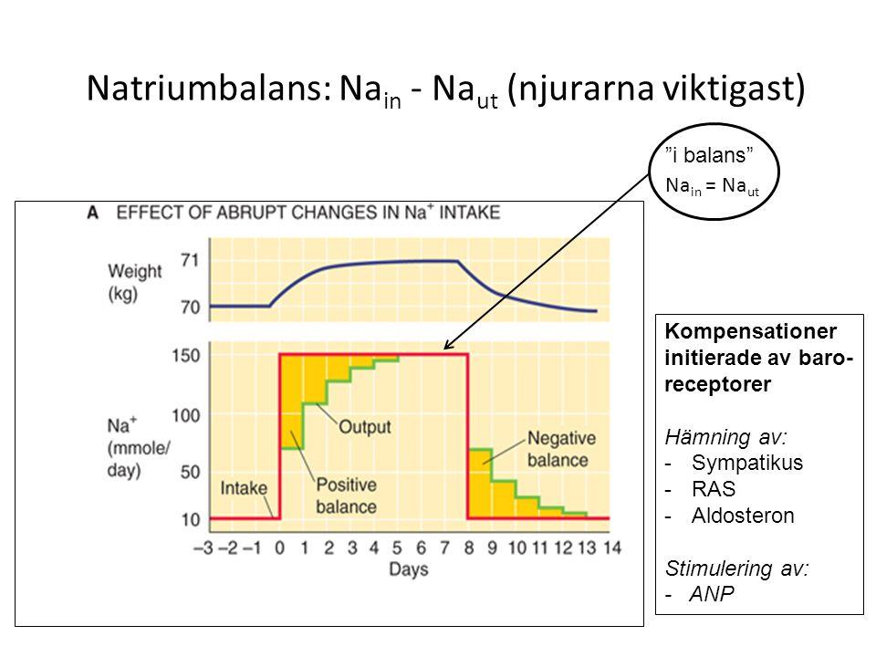 Na + utsöndringen regleras på tubulär nivå Dagligt normalt Na + intag/utsöndring ≈ 200 mmol/d = 4,5 g/d Daglig glomerulär filtration av Na + = 180 x 140 = 25 200 mmol/d ≈ 580 g/d Således: vid Na + balans utsöndras endast cirka 0,8 % av filtrerad Na +