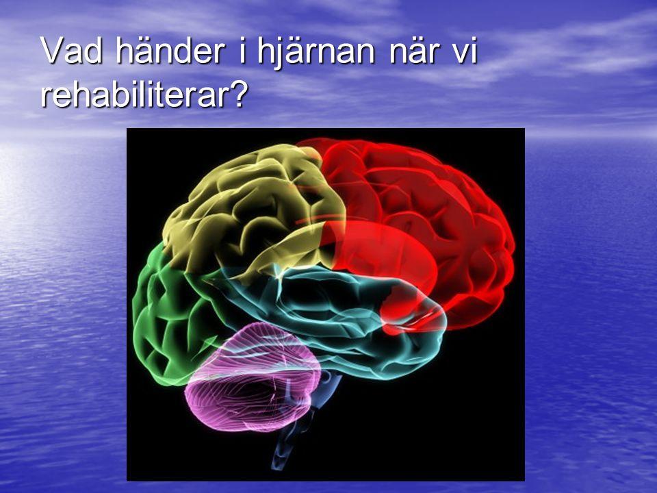 Vad händer i hjärnan när vi rehabiliterar?