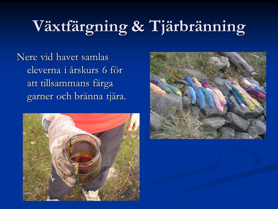 Växtfärgning & Tjärbränning Nere vid havet samlas eleverna i årskurs 6 för att tillsammans färga garner och bränna tjära.