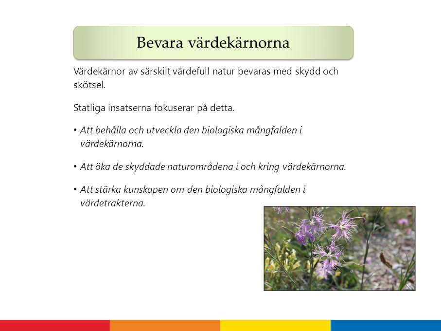 Värdekärnor av särskilt värdefull natur bevaras med skydd och skötsel. Statliga insatserna fokuserar på detta. Att behålla och utveckla den biologiska
