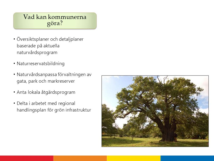 Översiktsplaner och detaljplaner baserade på aktuella naturvårdsprogram Naturreservatsbildning Naturvårdsanpassa förvaltningen av gata, park och markr