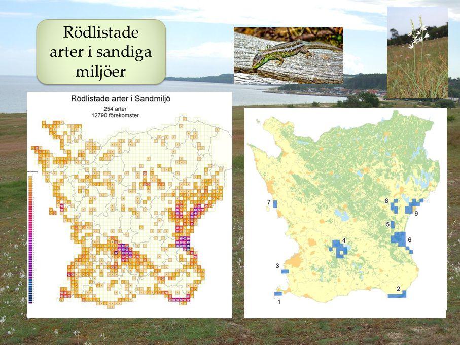 Rödlistade arter i sandiga miljöer