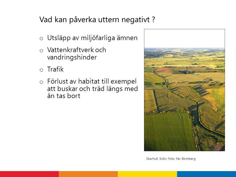 Vad kan påverka uttern negativt ? o Utsläpp av miljöfarliga ämnen o Vattenkraftverk och vandringshinder o Trafik o Förlust av habitat till exempel att