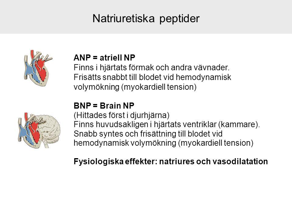Natriuretiska peptider ANP = atriell NP Finns i hjärtats förmak och andra vävnader. Frisätts snabbt till blodet vid hemodynamisk volymökning (myokardi