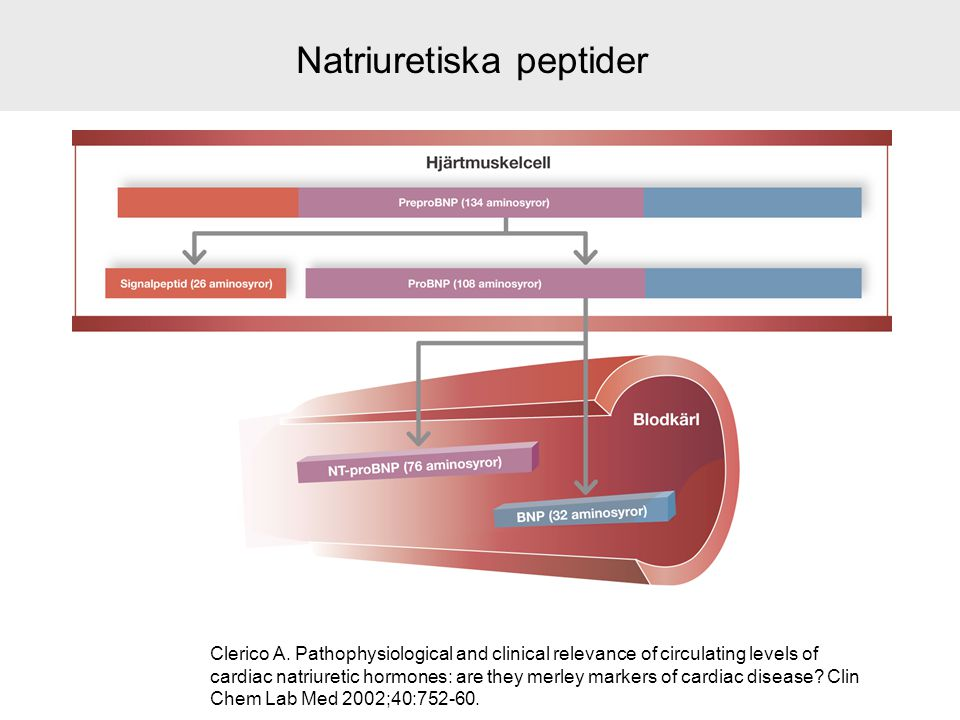 Natriuretiska peptider Clerico A. Pathophysiological and clinical relevance of circulating levels of cardiac natriuretic hormones: are they merley mar