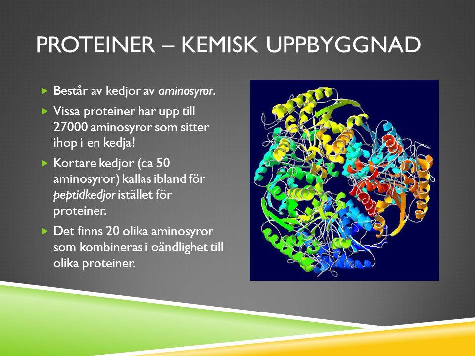 PROTEINER – KEMISK UPPBYGGNAD  Består av kedjor av aminosyror.
