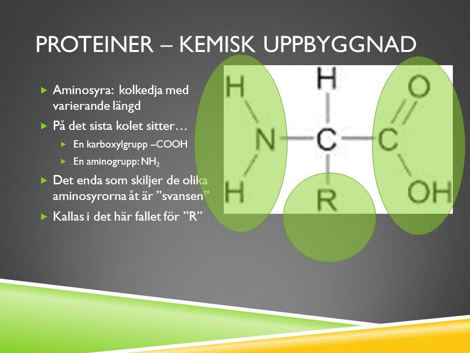 PROTEINER – KEMISK UPPBYGGNAD  Aminosyra: kolkedja med varierande längd  På det sista kolet sitter…  En karboxylgrupp –COOH  En aminogrupp: NH 2  Det enda som skiljer de olika aminosyrorna åt är svansen  Kallas i det här fallet för R