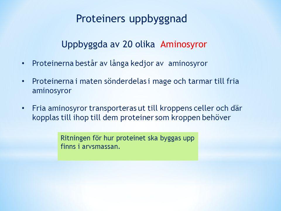 Proteinerna består av långa kedjor av aminosyror Proteinerna i maten sönderdelas i mage och tarmar till fria aminosyror Fria aminosyror transporteras