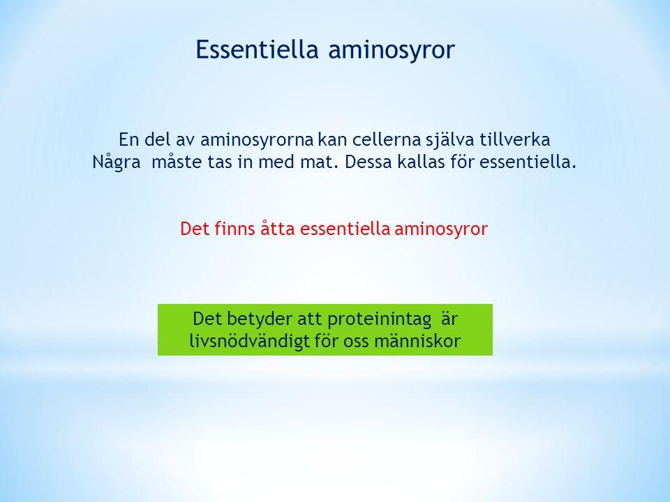 En del av aminosyrorna kan cellerna själva tillverka Några måste tas in med mat. Dessa kallas för essentiella. Det finns åtta essentiella aminosyror E