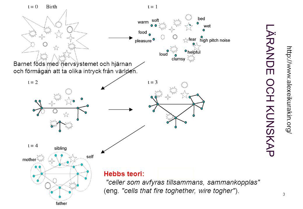 3 LÄRANDE OCH KUNSKAP http://www.alexeikurakin.org/ Hebbs teori: