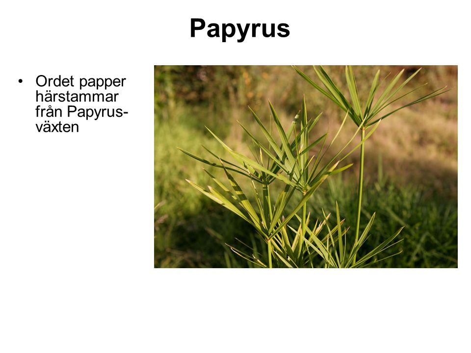 Papyrus Ordet papper härstammar från Papyrus- växten