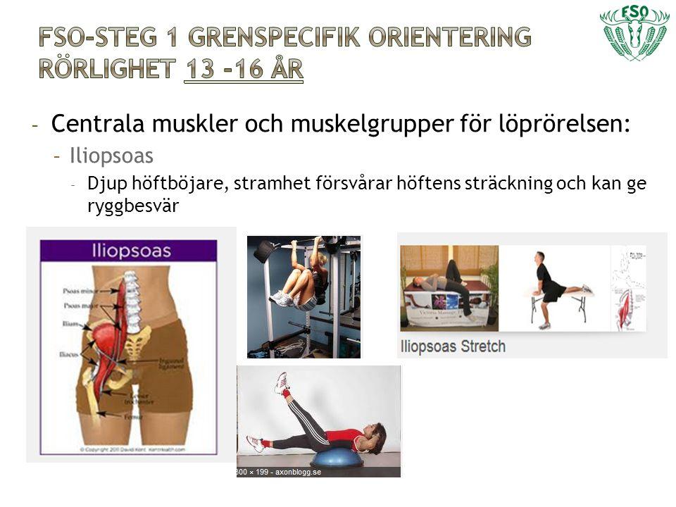 - Centrala muskler och muskelgrupper för löprörelsen: - Iliopsoas - Djup höftböjare, stramhet försvårar höftens sträckning och kan ge ryggbesvär