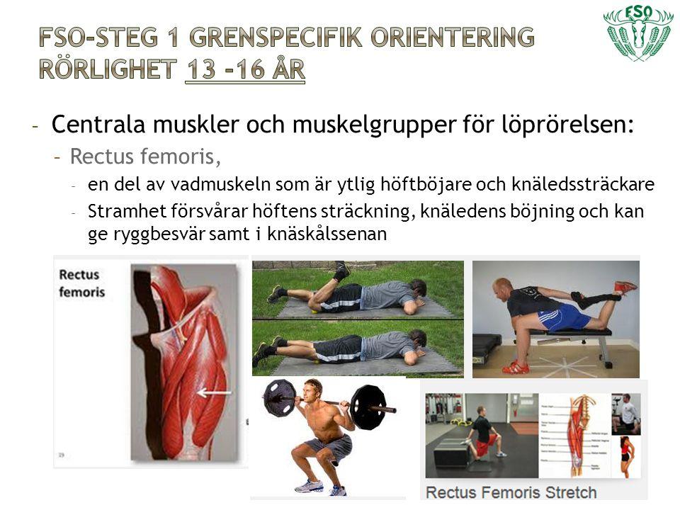 - Centrala muskler och muskelgrupper för löprörelsen: - Rectus femoris, - en del av vadmuskeln som är ytlig höftböjare och knäledssträckare - Stramhet