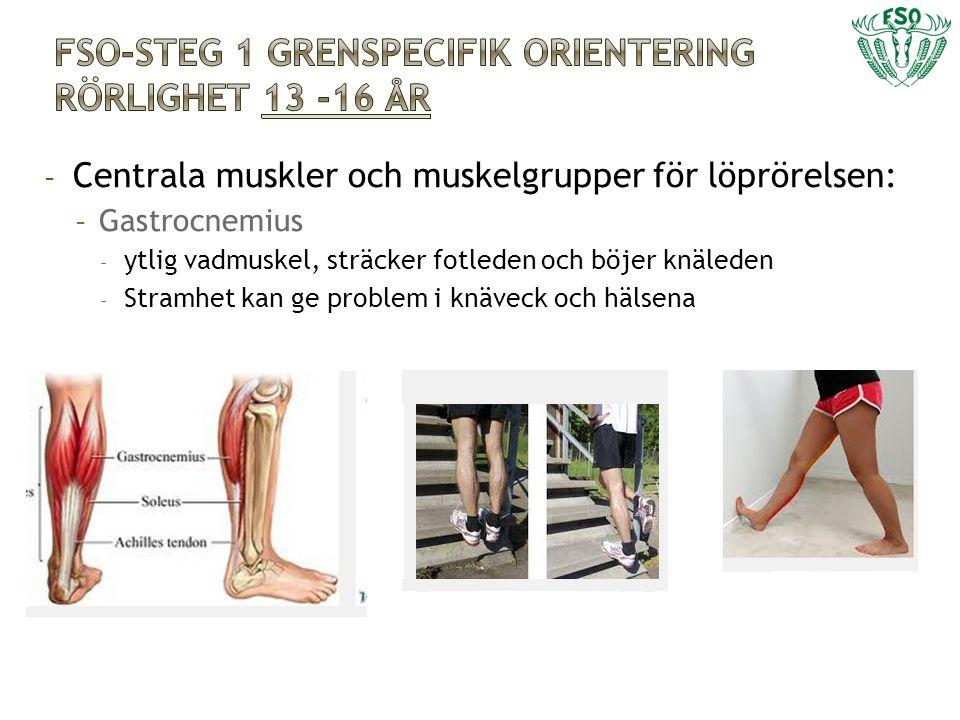 - Centrala muskler och muskelgrupper för löprörelsen: - Gastrocnemius - ytlig vadmuskel, sträcker fotleden och böjer knäleden - Stramhet kan ge proble