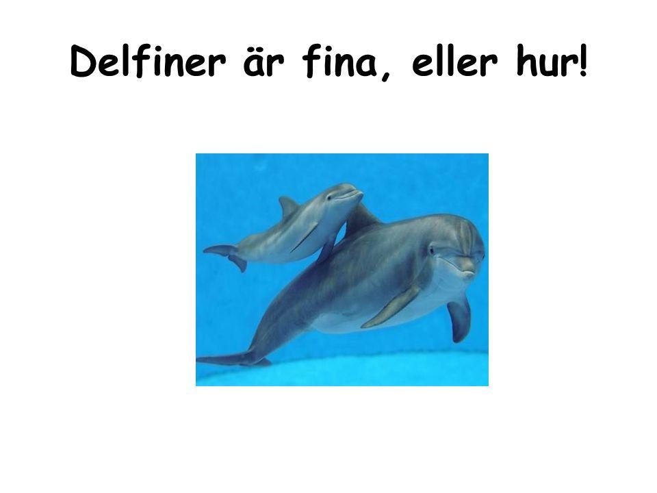 Källa: http://www.alltomdelfiner.se/fakta-om- delfiner/vad-ar-en-delfin/ http://www.alltomdelfiner.se/fakta-om- delfiner/vad-ar-en-delfin/ Ingela Hellqvist 150507 www.ingelabrunnsskolan.se