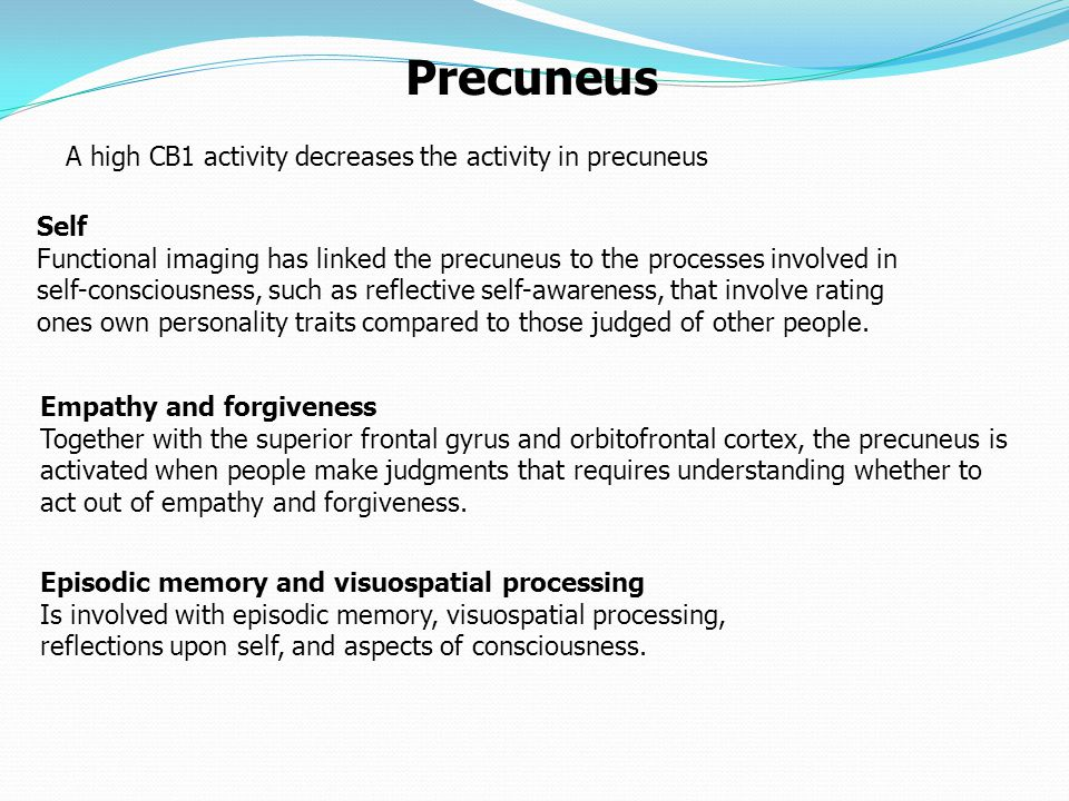 Self Functional imaging has linked the precuneus to the processes involved in self-consciousness, such as reflective self-awareness, that involve rating ones own personality traits compared to those judged of other people.