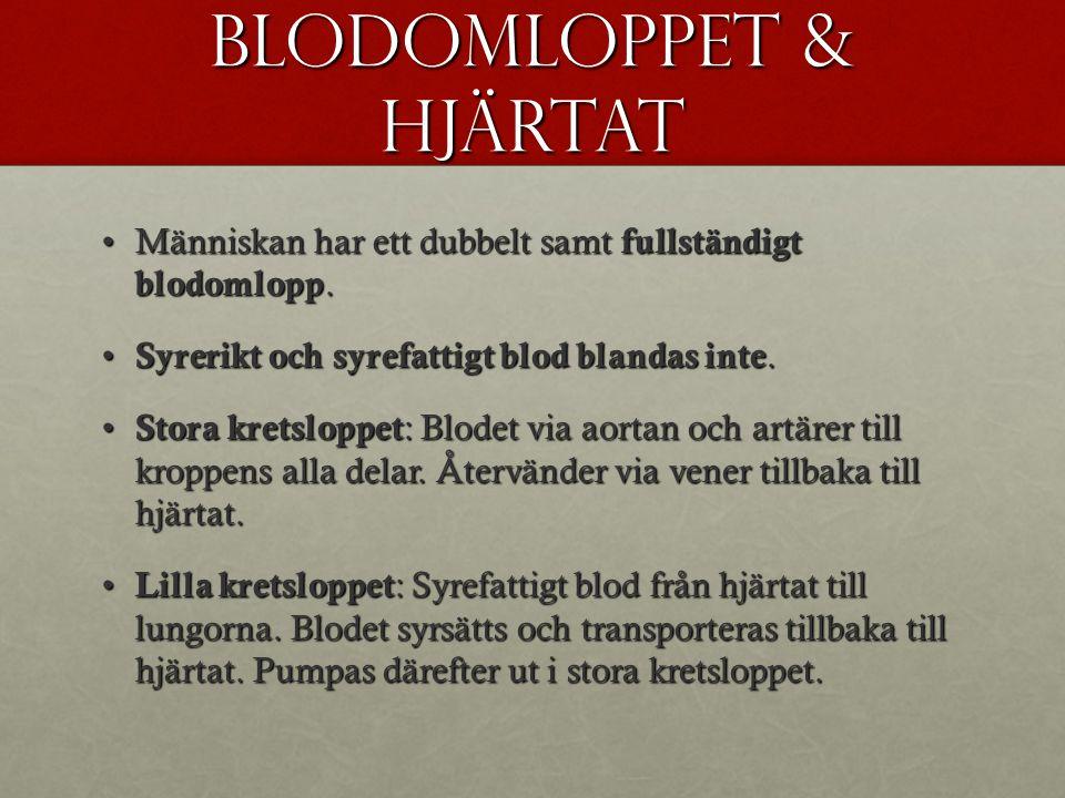 Blodomloppet & hjärtat Människan har ett dubbelt samt fullständigt blodomlopp.Människan har ett dubbelt samt fullständigt blodomlopp.