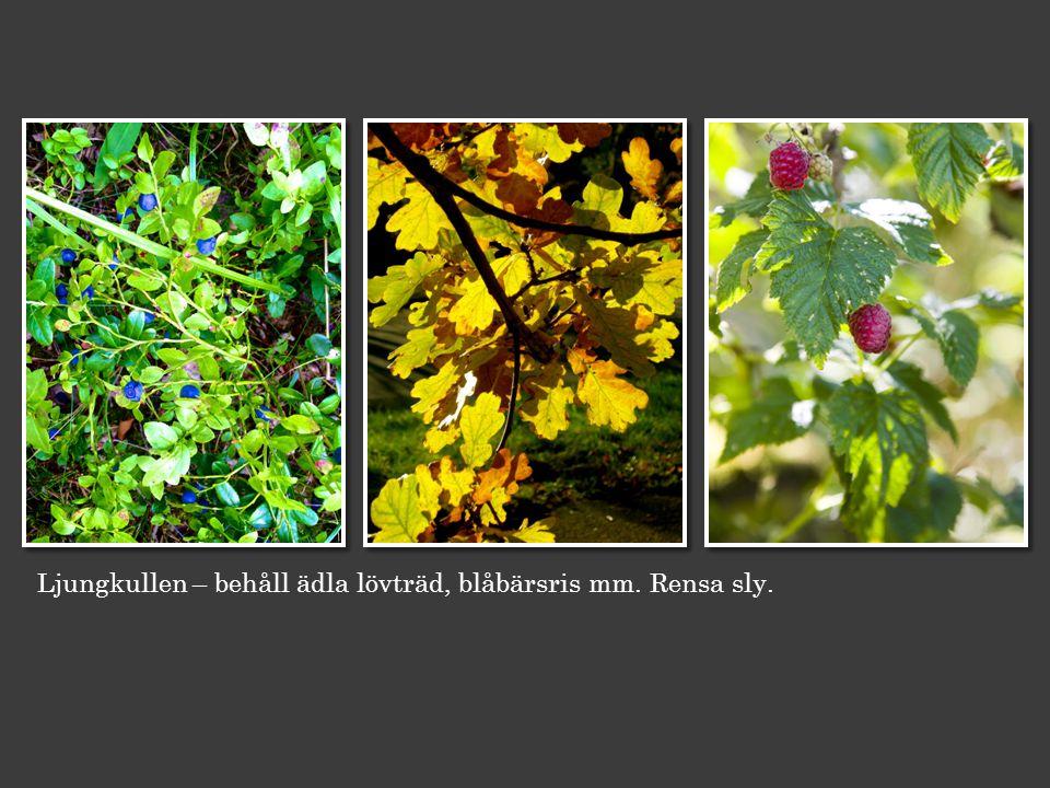 Ljungkullen – behåll ädla lövträd, blåbärsris mm. Rensa sly.