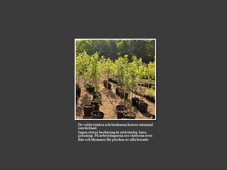 De valda träden och buskarna kräver minimal omvårdnad.