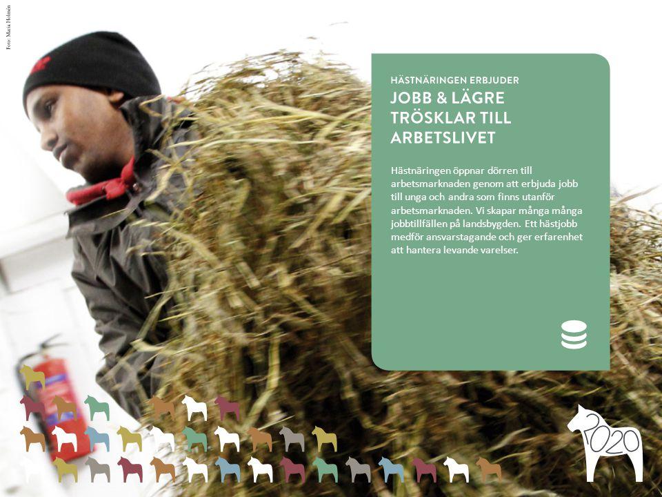 Hästnäringen öppnar dörren till arbetsmarknaden genom att erbjuda jobb till unga och andra som finns utanför arbetsmarknaden.