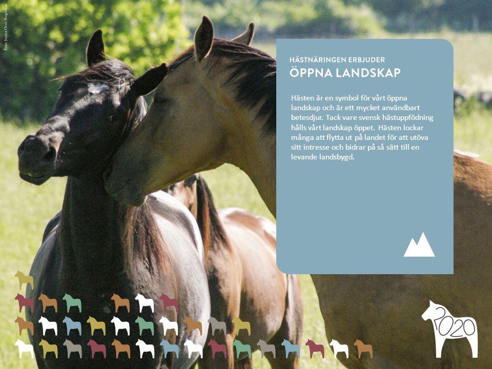 Hästen är en symbol för vårt öppna landskap och är ett mycket användbart betesdjur.