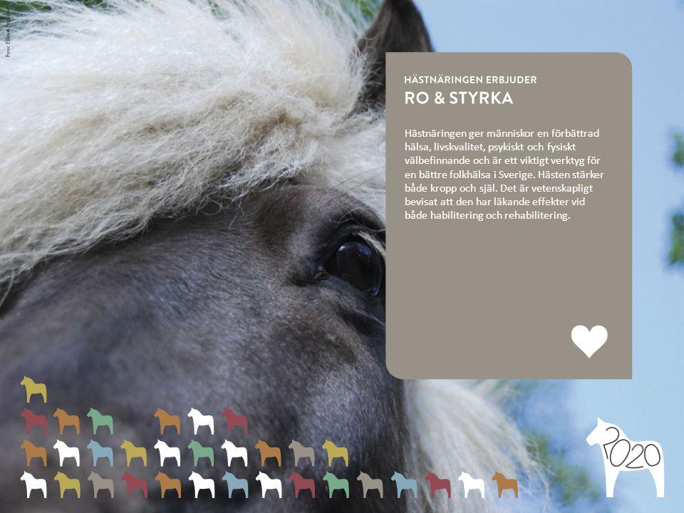 Hästnäringen ger människor en förbättrad hälsa, livskvalitet, psykiskt och fysiskt välbefinnande och är ett viktigt verktyg för en bättre folkhälsa i Sverige.