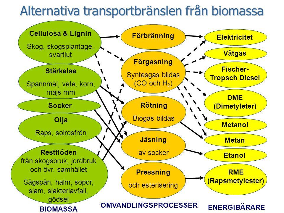Alternativa transportbränslen från biomassa Cellulosa & Lignin Skog, skogsplantage, svartlut Stärkelse Spannmål, vete, korn, majs mm SockerOlja Raps,