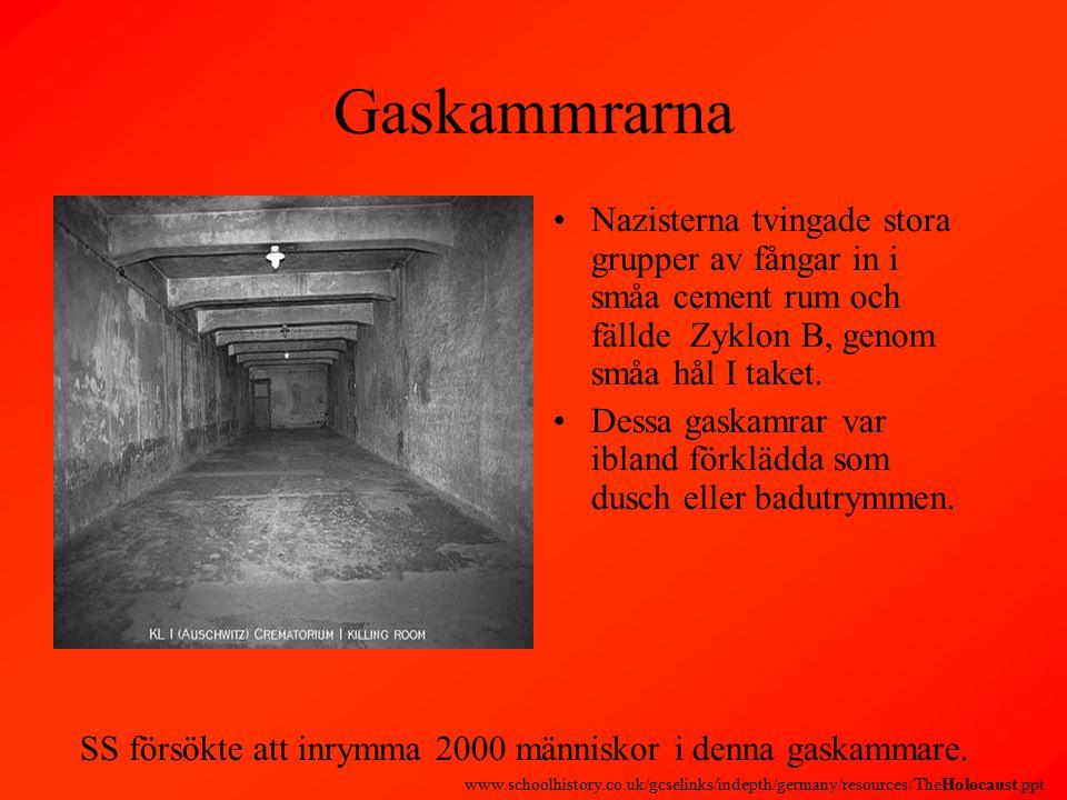 Gaskammrarna Nazisterna tvingade stora grupper av fångar in i småa cement rum och fällde Zyklon B, genom småa hål I taket.